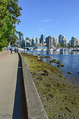 Stanley Park Seawall/ Coal Harbour (SonjaPetersonPh♡tography) Tags: vancouver bc bcparks britishcolumbia canada nikon nikond5300 stanleypark stanleyparkseawall marina vancouverharbour coalharbor coalharbour waterfront waterscape burrardinlet inlet cityscape buildings boats reflections waterreflections scenic scenery landscape park sailboats vessels seawall vancouveryachtclub walkways pathways vancity beautifulbc