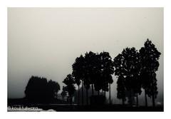 silhouette (kouji fujiwara) Tags: sihouette morning haze smoky fujifilm fujifilmxt2 xt2 fujinon xf1655mmf28 xf1655mm f28 blackandwhite blackwhite monochrome noir