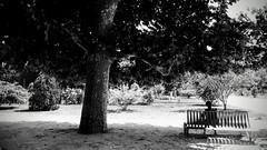 Sous l'arbre. (Dans le viseur) Tags: hb4116 jardindesplantes