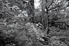 A Forest Captured in Monochrome (Black & White)