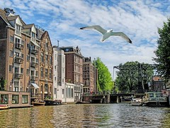 Somewhere in Amsterdam (Explored) (CosmoClick) Tags: canal amsterdam gull seagull