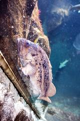 underwater imagery... (1/4) (steveleenow) Tags: vancouver vancouverbc vancouverbccanada vancouverbritishcolumbia vancouverbritishcolumbiacanada britishcolumbia canada vancouveraquarium aquarium plastic plastics waste junk trash