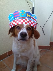 OK, I might be a BRITTANY spaniel, but I'm PROUD TO BE CROAT (Bambola 2012) Tags: french dog pas cane brittanyspaniel epagneulbreton francese francuskapasmina proudtobecroat razzafrancese frenchbreed croata hrvatica srcevatreno russia2018 frida kruna crown corona football soccer nogomet calcio tifo tifosa navijačica cheerleader hrvatskausrcu idemodokraja croatia croazia croacia hrvatska croatie francuska france francia