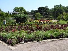 Wheaton, IL, Cantigny Park, Idea Garden (Mary Warren 11.0+ Million Views) Tags: wheatonil cantignypark ideagarden garden park nature flora plants blooms blossoms flowers fence