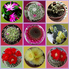 """Friendship is the only cement that will ever hold the world together."" (martian cat) Tags: fdsflickrtoys succulent inspirational ©martiancatinjapan allrightsreserved© macro flower nature succulents ©allrightsreserved martiancatinjapan© balconygarden mybalconygarden gardening hobby beauty ☺allrightsreserved allrightsreserved epiphylium cactus ☺martiancatinjapan martiancat martiancat© ©martiancat martiancatinjapan"