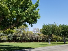 July 13, 2018 (18) (gaymay) Tags: california desert gay love palmsprings riversidecounty coachellavalley sonorandesert cemetery cathedralcity desertmemorialcemetery green rainbowgame