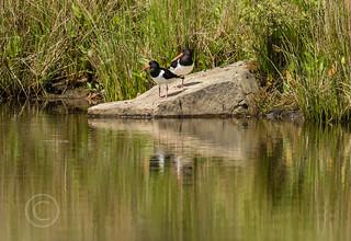 Wildlife around Magdalen June 2018 139