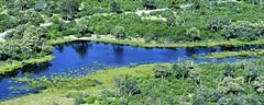Botswana 2018 - Delta de l'Okavango (philippebeenne) Tags: afrique africa botswana deltadelokavango okavango vueaérienne nature paysages waterscape landscape vert green sauvage wild