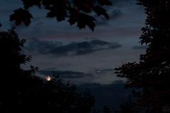 Crescent Moon & Venus / @ 80 mm / 2018-06-16 (astrofreak81) Tags: mond venus night crescent dresden moon