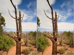 Home For Tree (Jeff®) Tags: jeff® j3ffr3y copyright©byjeffreytaipale arizona grandcanyon unitedstates usa nationalpark