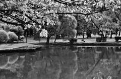 P6210030 (yaros66) Tags: achromat softfocus garden flowers trees