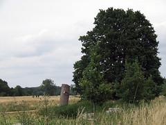 In Mönchengladbach-Geneicken (borntobewild1946) Tags: copyrightbyberndloosborntobewild1946 mittejuni2018 nrw nordrheinwestfalen niederrhein mönchengladbach moenchengladbach linksrheinisch rheinland baum baumstumpf baumstamm felder tree fields