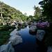 Ordway Japanese Garden, Como Park 5/18/18 #comozoo #mymmc #mysaintpaul