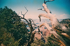 Canyon film (kevin dooley) Tags: canyon film superheadz lomo