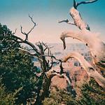 Canyon film thumbnail