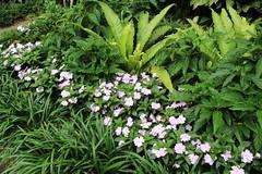 Bellingrath Gardens and Home 2018 04 (MJRGoblin) Tags: mobilecounty 2018 theodore alabama