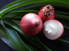 Onions...close-up (fibregal) Tags: 7dwf closeup closeups food onions