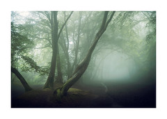 Coombe Hill 28 May 2018 (Matthew Dartford) Tags: matthewdartford atmospheric backlight backlit branch breakinglight depth fog foggy forest landscape leaf leaves mist misty tree trees trunk woodland woods