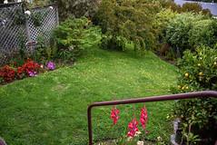 Splash of Red and Pink (Jocey K) Tags: newzealand akaroa bankspeninsula nikond750 flowers garden trees plants