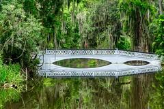 Magnolia Plantation, SC (ipadzwochris) Tags: vacation spiegelung reflection swamp sc bridges bridge plants trees nature magnoliaplantation charleston southcarolina usa reise urlaub travel