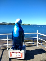 Maggie's penguin parade: Number 38: Crystal Azure. (Dave Paterson) Tags: penguin parade cute cuddly fun fantastic imagination imaginative tayside dundee brechin newport kirriemuir perth design art artists creative creation sculpture tourist trail sea river bridge blue sky sun sunshine weather charity cancer maggies care suffering donation auction