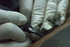 Tatuaje (Las Lineas) Tags: trabajar tattoo tatuaje tattooist tatuar tatuador hands manos aguja agujas contraste contrast