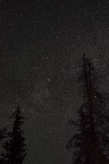 Quiet Nights & Starry Skies Pt. I (Miss Marisa Renee) Tags: marisarenee canon canon5dmarkii astrophotography night nightphotography stars starry starlight starphotography milkyway trees silhouette sky skies rockymountains colorado chamberslake camping campingtrip rooseveltnationalforest dreamy pine pinetrees dark darkness nighttime vertical verticalnature
