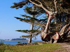 Arbre éléphant (An Arzhig) Tags: roscoff perharidy bretagne finistère france panasonic lumix gx800