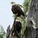 Eagles 5m