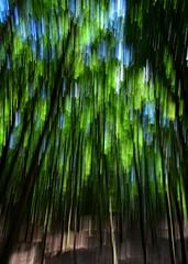 Everything in motion (Tobi_2008) Tags: wald forest bäume trees natur nature landschaft landscape hessen deutschland germany allemagne germania