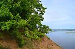 Oak crown on the edge (МирославСтаменов) Tags: russia togliatti volga river slope edge crown oak overlook