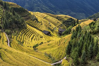 *Ping'an terraced rice fields*