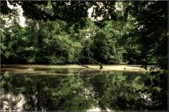 la mare- manoir abandonné-rurex (Fotomaniak 53) Tags: mare vert eau nature boue grenouilles moustiques manoir parc abandonnéé rurex urbex été 2018 fotomaniak53 effets couleurs psp lightroom6
