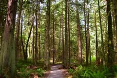 DSC_0293 (gtsieg) Tags: bainbridgeisland grandforest