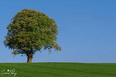Tree (geraintparry) Tags: nikond500 d500 nikon sigma south wales landscape outdoor nature naturephotography geraint parry geraintparry michaelstonyfedw cardiff