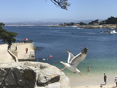 20180618_204509524_iOS (jimward85) Tags: montereybay pacificgrove california loverspoint