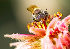 Insects #1 (_dreamseller_) Tags: garden flower nature animal fujifilmxh1 fujinon xf80mm xh1 fujifilm photography makro macro insects insect