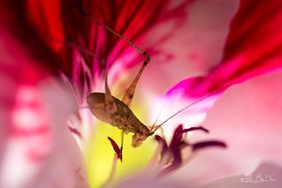 Pour vivre heureux, vivons caché...! - For live happy, live hidden...!