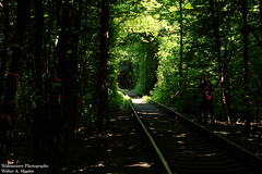 Tunnel of Love (mercuryriser2005) Tags: people trees nature railway ukraine klevan train tunnel green forest woods travel solo vacation locomotive ribbons outside exotic