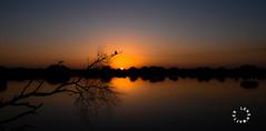 a kingfisher morning! (lensnmatter) Tags: kingfisher morning sunrise dawn bird lake river