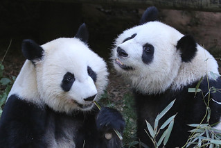 Happy Birthday, Mei Lun and Mei Huan!