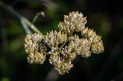 Flores de montanha (mcvmjr1971) Tags: parque estadual três picos nova friburgo rio de janeiro brasil nikon mmoraes d7000 travel
