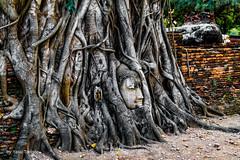 Wat Mahathat Ayutthaya Thailand-21a (Yasu Torigoe) Tags: