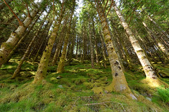 Don't feed the trolls ... (Vinc_1995) Tags: wald bäume trees tree forest fotografie photography nat nature natur naturephotography eos eos200d earth beautiful beautifulearth rosendal canon canondeutschland canonphotography nor norway norwegen oberhuber trolls trolle weitwinkel