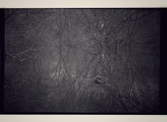 Reflection (Olympus RC35, Kodak Tri-X) Developed in Kodak HC-110 (Mr B's Photography) Tags: trees reflections olympus kodak film