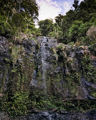 Poonyahra Falls ([S u m m i t] s c a p e) Tags: poonyahrafalls springbrooknationalpark hiking trailrunning waterfall springbrook queensland australia