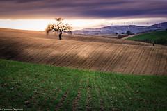 Albero e fotografo (SDB79) Tags: tramonto luce colline campagna albero