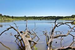 Summer at the Lake (Hugo von Schreck) Tags: hugovonschreck lake see grebenhain hessen deutschland germany europe fantasticnature canoneos5dsr greatphotographers onlythebestofnature tamron28300mmf3563divcpzda010
