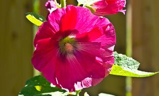 Blüte / Blossom # 5