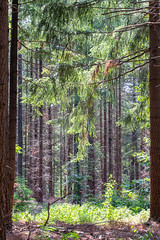 Beautiful forest view (Photography by Martijn Aalbers) Tags: forest bos trees bomen leaves bladeren green groen branches takken path pad walk wandeling nature natuur colour kleur color sunny zonnig summer zomer light licht shadow schaduw canon eos 77d ef70200mm f4l is usm wwwgevoeligeplatennl utrechtseheuvelrug